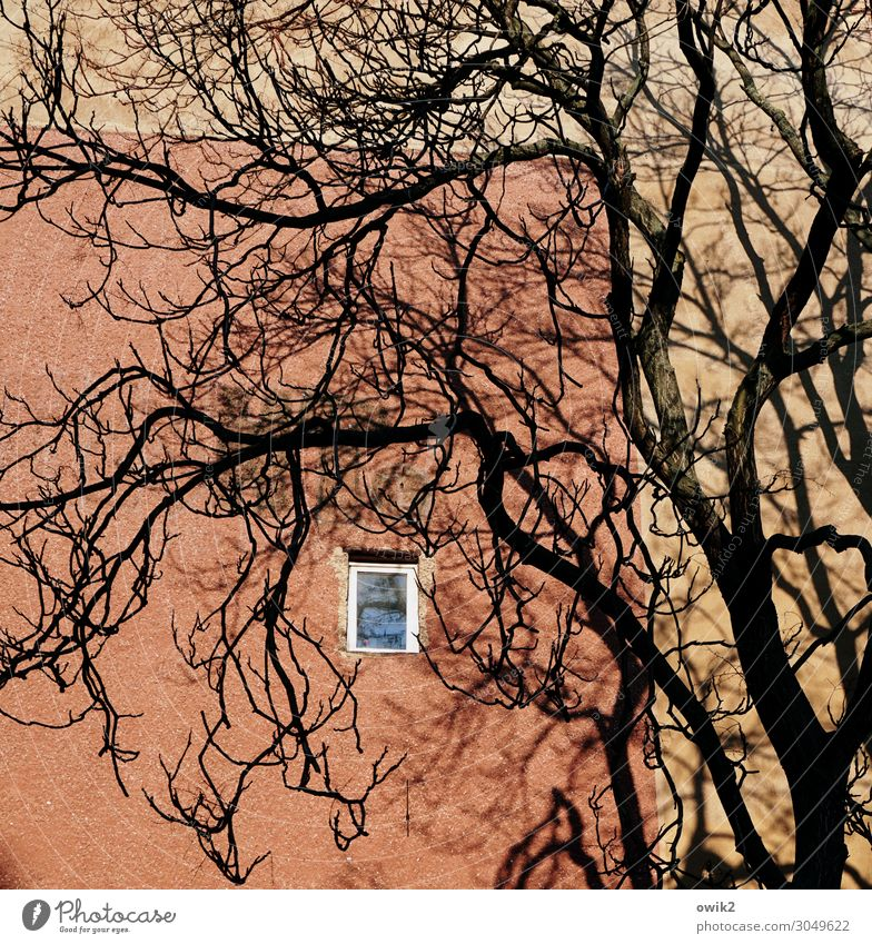 colonel's room Plant Tree Branch Downtown Berlin Capital city Populated House (Residential Structure) Wall (barrier) Wall (building) Window Tall Small Above