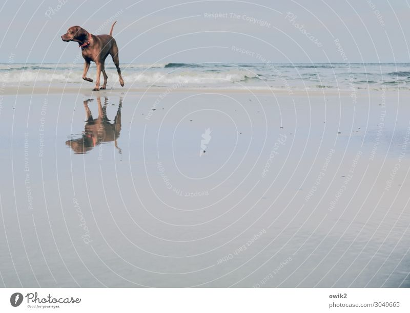 diva Environment Nature Landscape Animal Sand Air Water Sky Horizon Beautiful weather Waves Coast Beach Baltic Sea Dog 1 Observe Movement Walking Looking Free