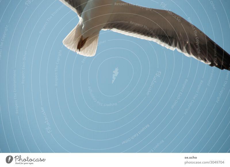 Sky Nature Beautiful Ocean Animal Environment Freedom Bird Flying Air Wild animal Power Speed Wing Cool (slang) Watchfulness