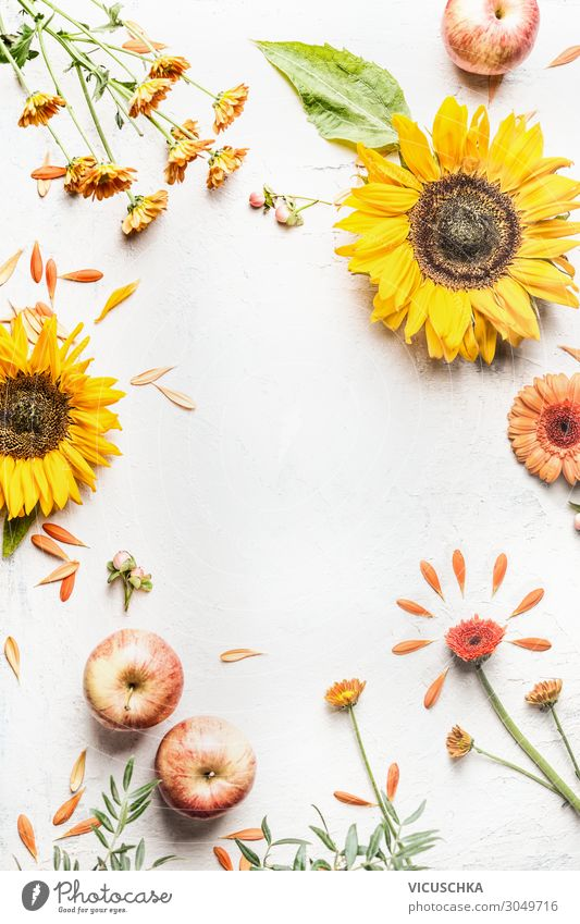 Autumn background with sunflowers and apples Style Design Summer Nature Decoration Bouquet Background picture Flower Sunflower Apple Rose plants