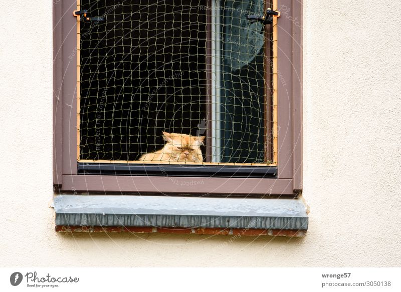 Cat Town Animal Window Wall (building) Sadness Wall (barrier) Living or residing Vantage point Wait Observe Curiosity Domestic cat Pet Net Watchfulness