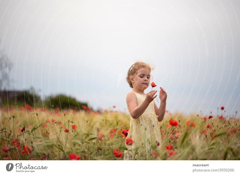 Woman Child Summer Plant Red Flower Animal Girl Life Blossom Feminine Field To hold on Poppy Enchanting Poppy field