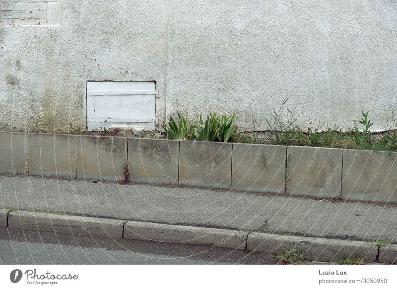 roadside Small Town Deserted Wall (barrier) Wall (building) Street Old Dark Gloomy Gray Green White Sadness Grass Light green Plaster Subdued colour
