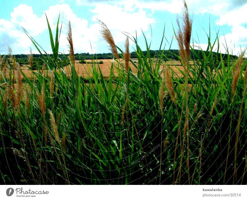field Field Grass Green Nature