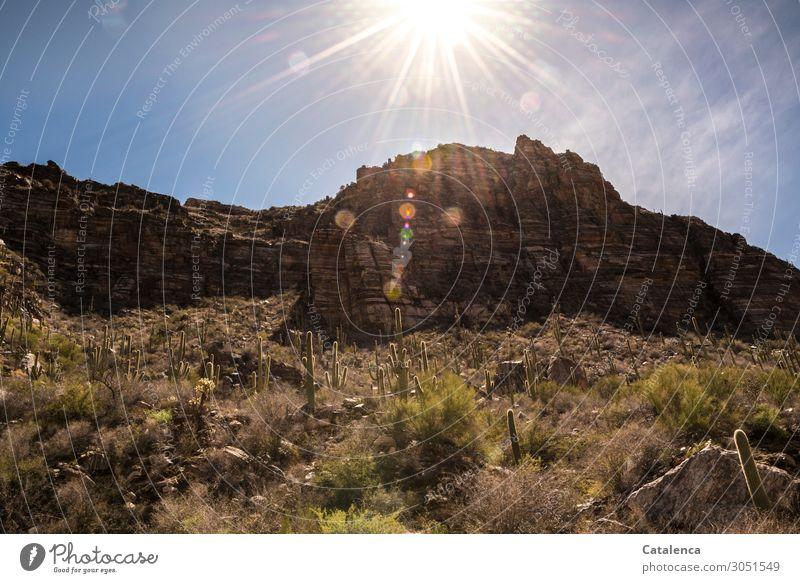 light Nature Landscape Sky Cloudless sky Sun Sunlight Climate change Beautiful weather Plant Bushes Cactus Saguaro cactus Rock Mountain Desert Glittering