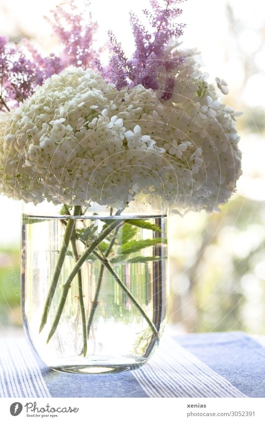 Hydrangea in vase Living or residing Flat (apartment) Decoration Flower vase Bouquet Tablecloth Blossom Hydrangea blossom Blossoming Fragrance Blue Green Pink