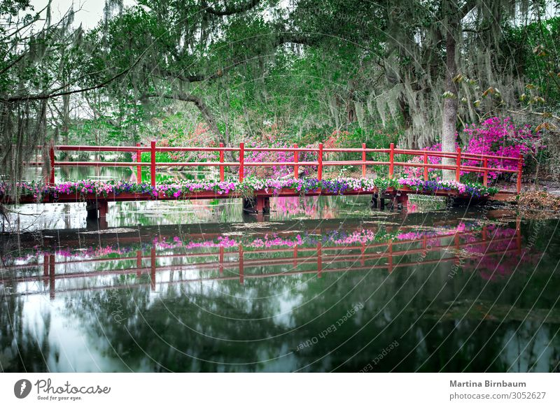 Red bridge with blooming flowers in Charleston Beautiful Vacation & Travel Tourism Garden Nature Landscape Plant Tree Flower Moss Park Forest Lake Bridge