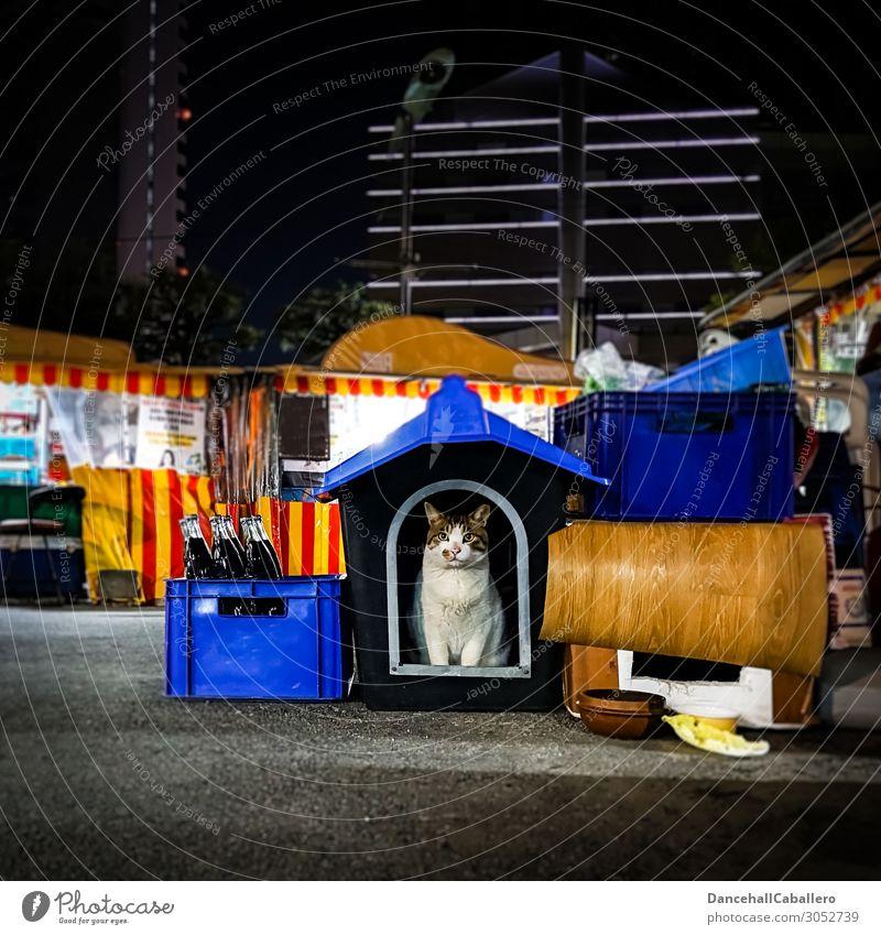 marketable Animal Town Downtown Outskirts Pedestrian precinct Pet Cat 1 Dark Cute Beautiful Contentment Love of animals Loneliness Hut night market Markets