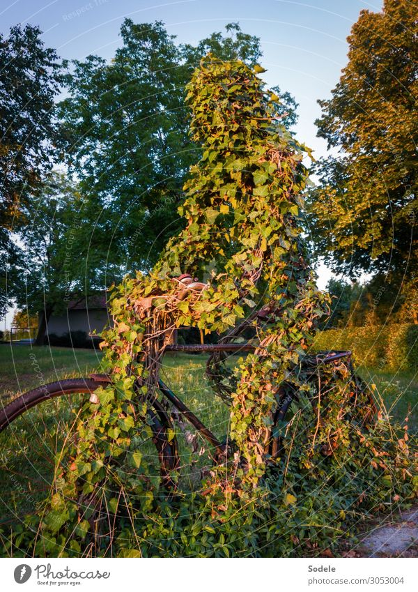 cyclist monument Leisure and hobbies Sports Fitness Sports Training Cycling Bicycle Art Sculpture Tree Ivy Meadow Park Allegory Esthetic Authentic Exceptional