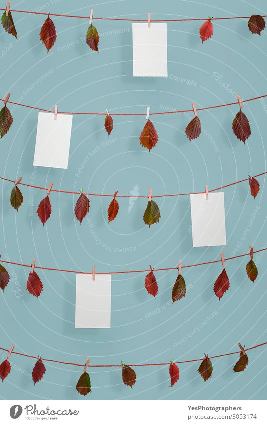 Autumn leaves and blank paper sheets on string Rope Nature Plant Leaf Ornament Retro Red Arrangement November October background Blank blue wall Clothesline