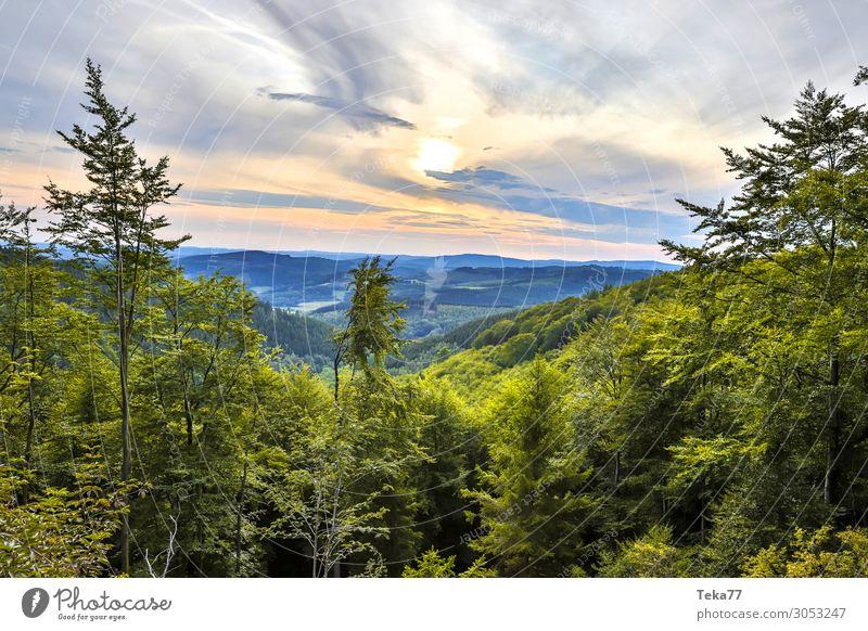 Nature Plant Landscape Forest Mountain Environment Esthetic Hill Siegerland