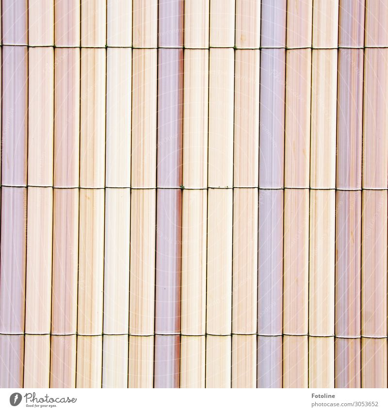 fence Wood Bright Fence Pastel tone Bound Bamboo Bamboo fence Pink Beige Colour photo Multicoloured Exterior shot Deserted Day Light