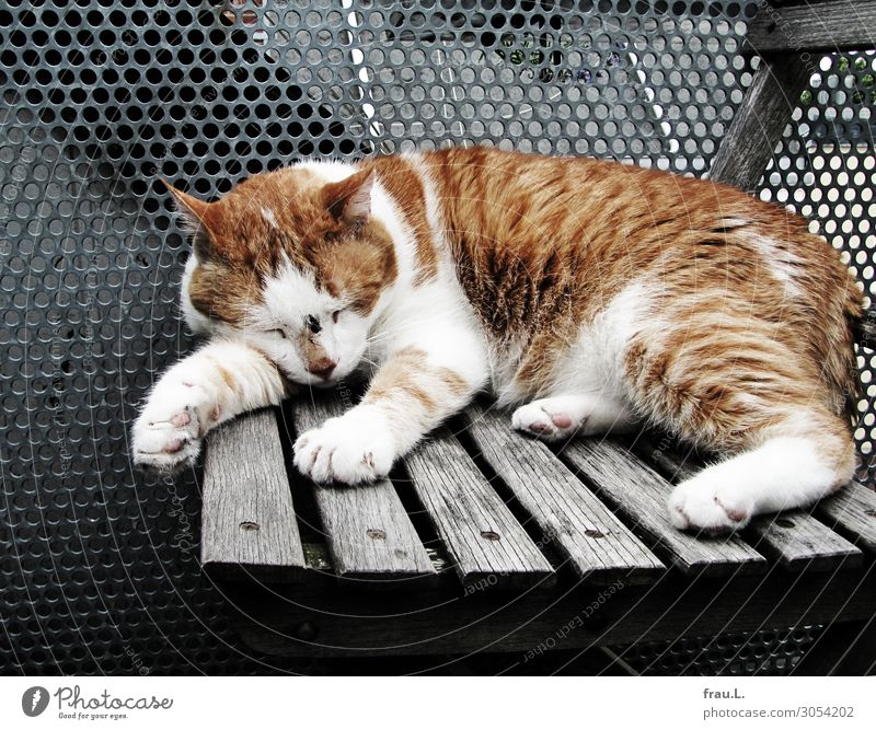 after the fight Chair Balcony Terrace Animal Pet Cat 1 Write Dream Sadness Small Illness Brown White Fatigue Aggression Fight Wound territory defense Warrior