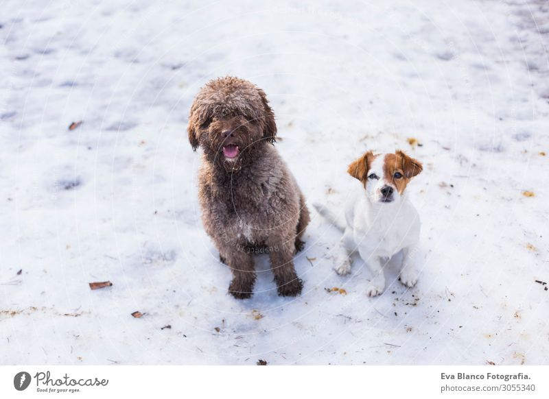 two cute dogs at the mountain in snow looking at the camera Vacation & Travel Nature Dog Summer Beautiful White Landscape Animal Joy Winter Mountain Healthy
