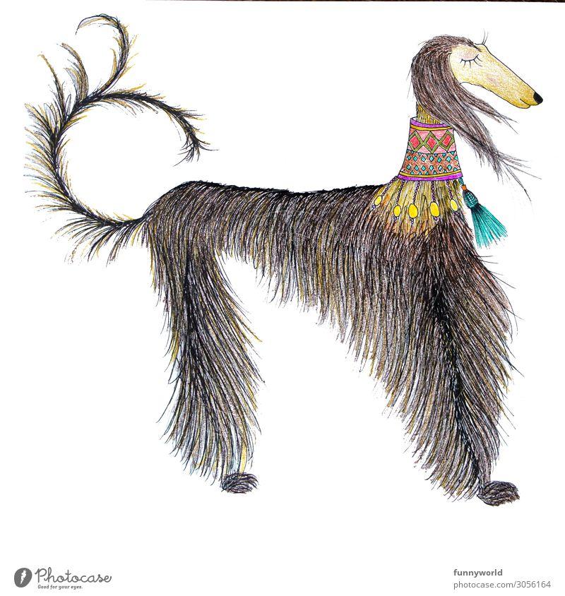 Dog Beautiful Animal Calm Exceptional Pet Thin Jewellery Tails Chic Noble Dog collar Greyhound Status symbol