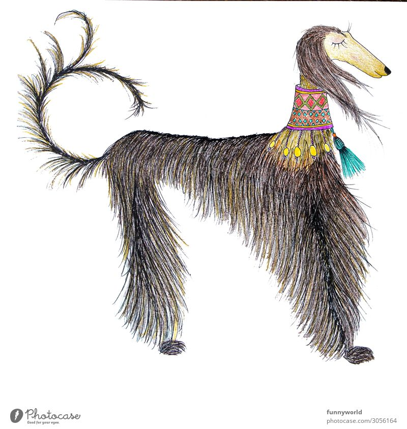 The noble Afghan Animal Pet Dog 1 Exceptional Beautiful Greyhound Noble Thin Jewellery Dog collar Status symbol Calm Chic Tails Multicoloured Deserted