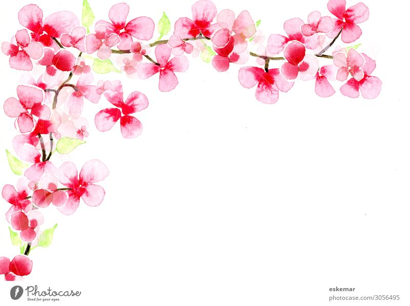 cherry blossom branch Art Work of art Painting and drawing (object) Watercolors on paper Nature Plant Spring Tree Blossom Cherry blossom Twig Esthetic Fragrance