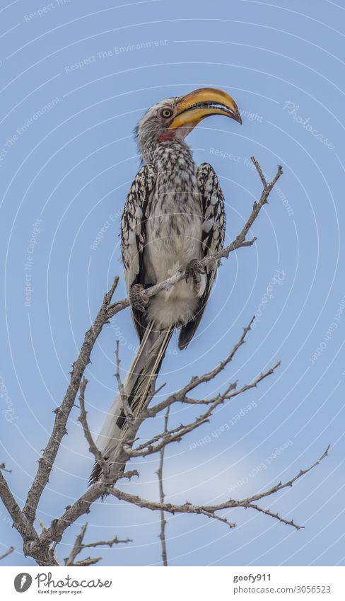 Yellow-billed Hornbill Vacation & Travel Tourism Trip Adventure Far-off places Freedom Safari Expedition Sky Tree Animal Wild animal Bird Animal face Wing 1
