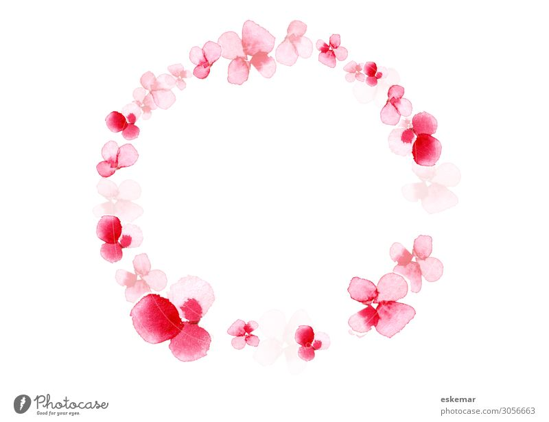 Nature Plant Beautiful White Tree Flower Background picture Blossom Spring Copy Space Pink Esthetic Blossoming Circle Round Twig