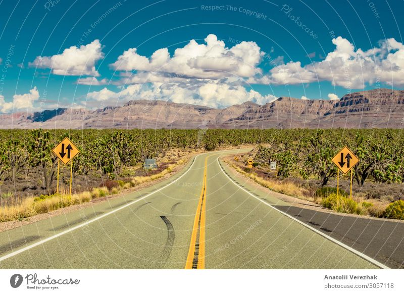 Road in arizona desert through Joshua trees forest Beautiful Vacation & Travel Tourism Summer Mountain Nature Landscape Plant Sand Sky Clouds Tree Grass Cactus