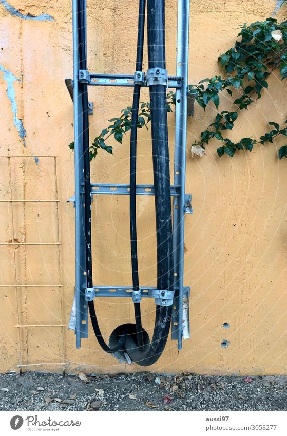 Wall (building) Electricity Cable Derelict Ladder Grating Flake off Conduit Transmission lines Ivy Tendril Creeper Electrician Metal grid Mesh grid Supply pipe