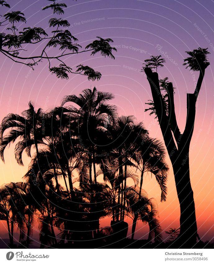 Dusk in Hoi An Vietnam Asia Colour photo Exterior shot Vacation & Travel Tourism Far-off places Adventure Multicoloured palms Visual spectacle Colour game Trip