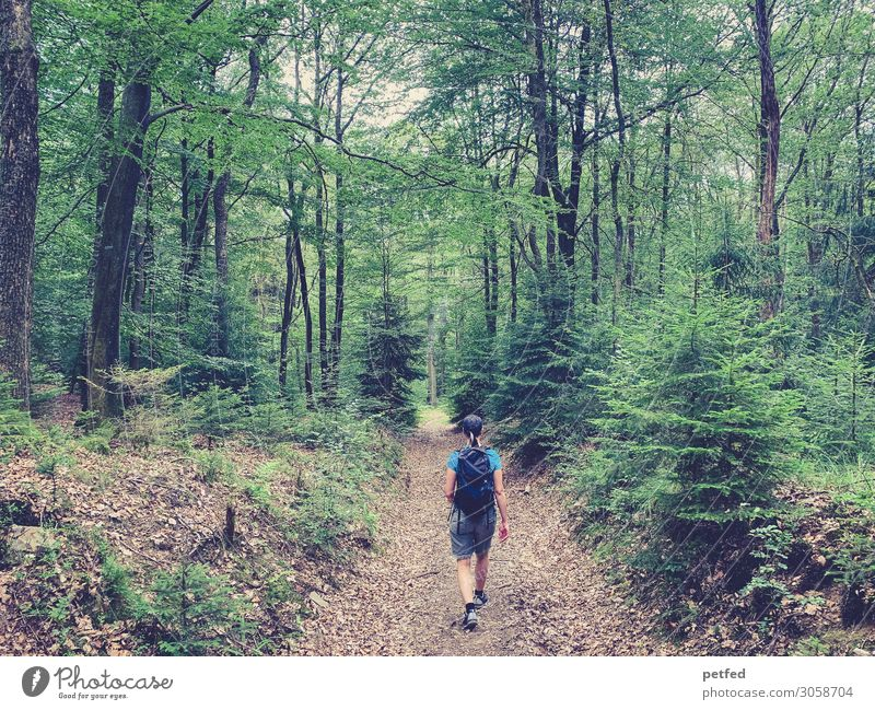 Walk the Woods II Summer Hiking 1 Human being Nature Tree Forest Relaxation Fitness Going Sports Fragrance Beautiful Brown Green Joy Contentment Calm Adventure