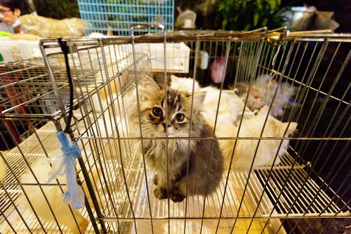Cat Animal Baby animal Cute Asia Domestic cat Pet Animalistic Trade Captured Sell Thailand Cage Market stall Cat eyes Petting zoo