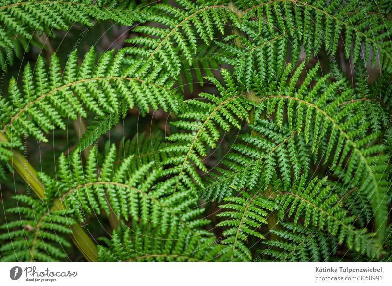 Grün grün grün Nature Plant Summer Fern Beautiful Green Forest Fresh Leaf Exterior shot Natural Natural phenomenon Shadow Light full-frame image Climate