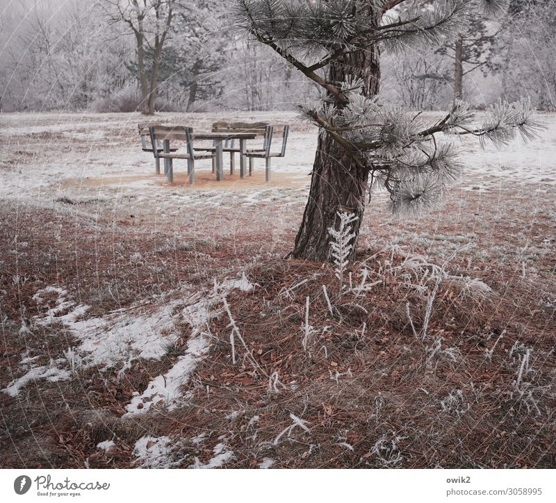 hibernation Environment Nature Landscape Plant Earth Winter Beautiful weather Ice Frost Snow Tree Bushes Pine Park Forest seating group Chair Table Simple Cold