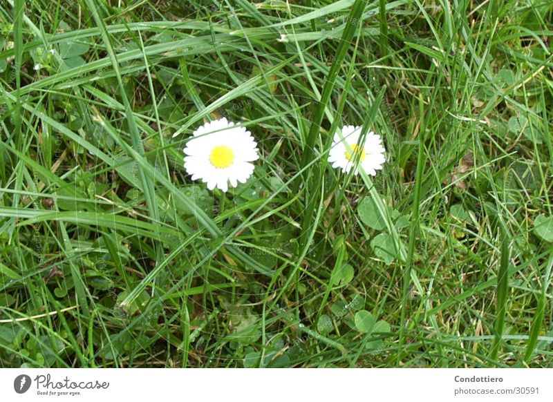 Flower Green Summer Meadow Spring Beautiful weather Daisy