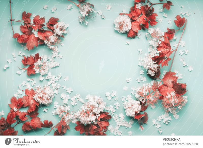 Frame of white flowers with red leaves Design Feasts & Celebrations Nature Plant Flower Leaf Decoration Bouquet frame Background picture White Red Blue