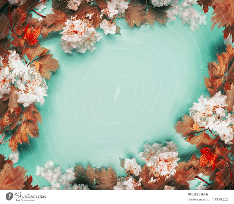 Beautiful frame of autumn leaves and flowers on turquoise blue background, top view beautiful copy space bouquet branch overhead desk composition design table