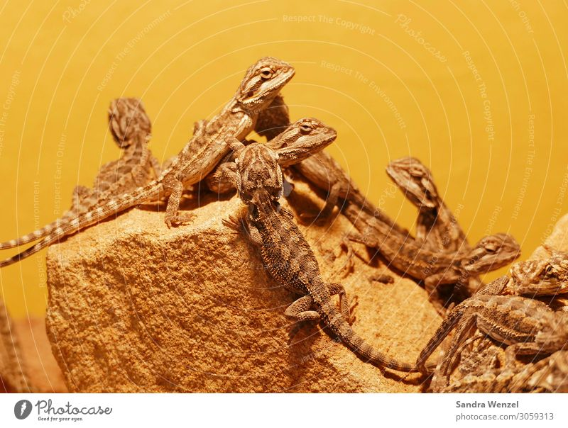 geckos Animal Group of animals Sleep Looking Reptiles Gecko Colour photo Deserted Neutral Background