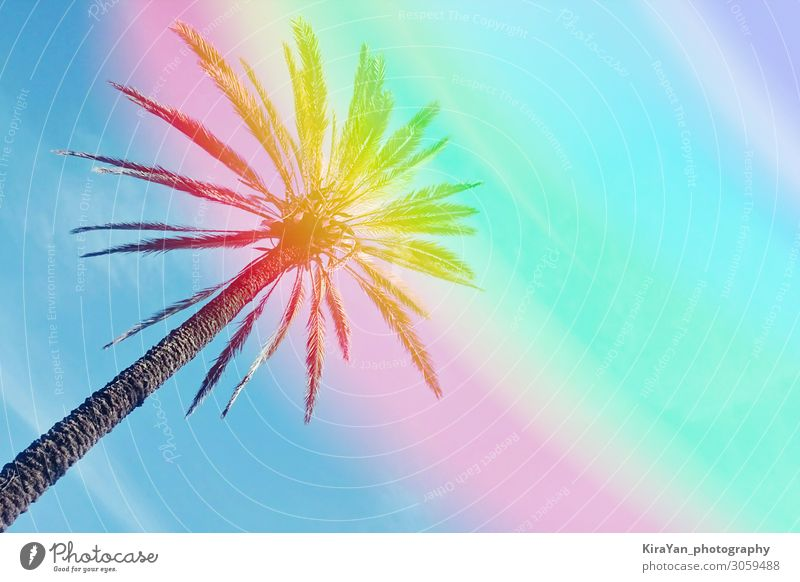 Abstract one palm tree against colorful sky background with rainbow paradise abstract beach blue bright coconut concept conceptual copy space effect exotic