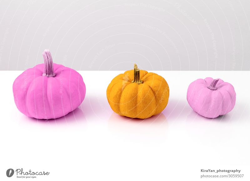 Three colorful pumpkins on white Vegetable Design Exotic Decoration Thanksgiving Hallowe'en Nature Autumn Collection Shopping Lie Threat Kitsch Yellow Violet