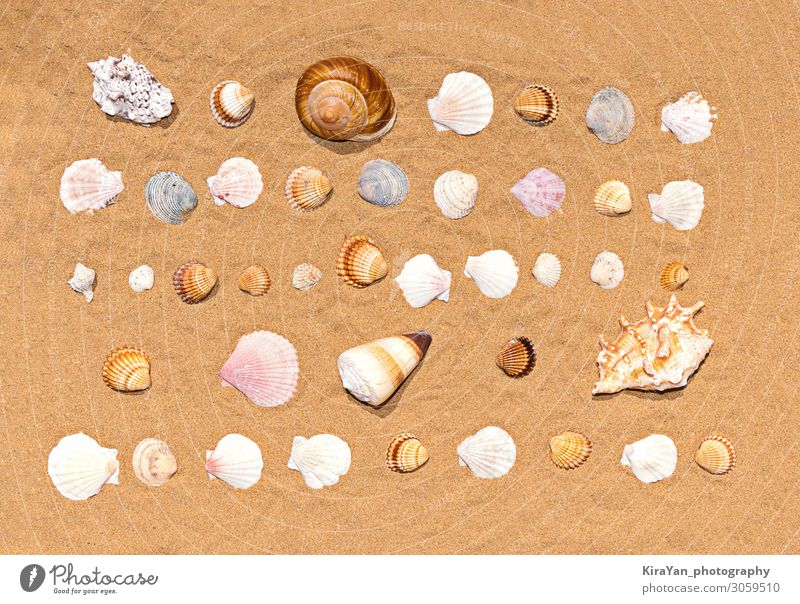 Flat lay pattern of colorful and various seashells on sea sand background. Summertime texture summertime beach decoration natural object coast tourism