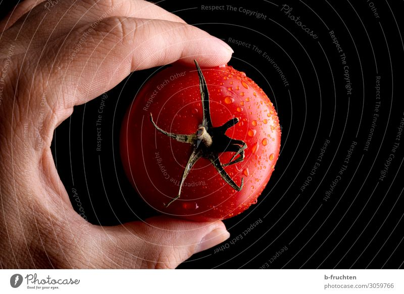 tomato Food Vegetable Nutrition Organic produce Vegetarian diet Healthy Eating Hand Fingers Work and employment Utilize Observe Touch To hold on To enjoy Fresh