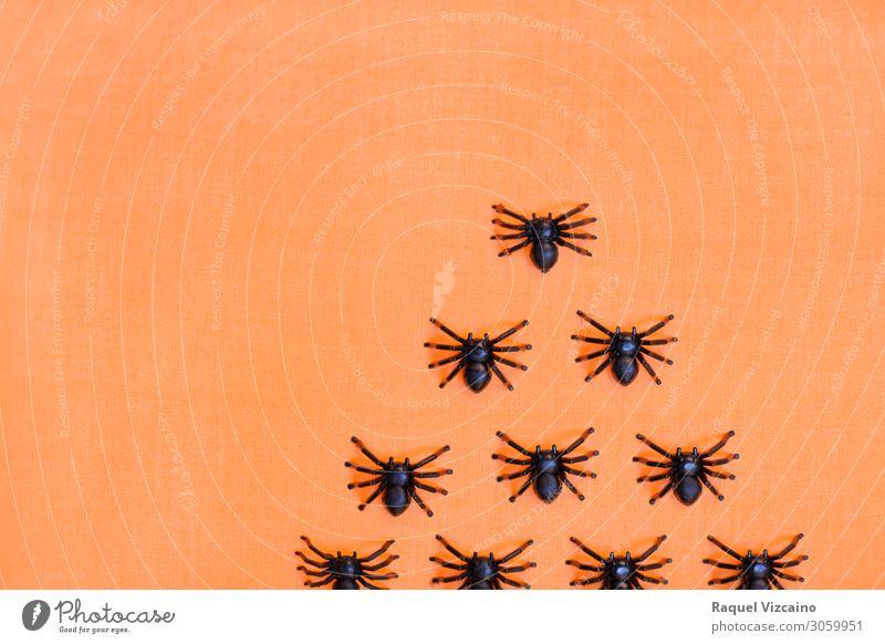 Horrifying halloween tarantulas Hallowe'en Animal Spider Group of animals Creepy Orange Black Horror Bizarre Insect arachnid Spider's web arachnophobia