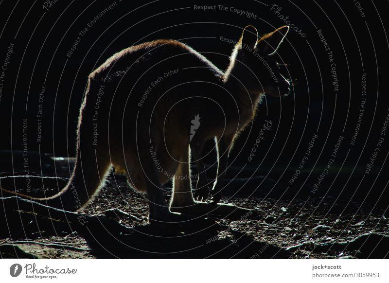 kangaroo silhouette Kangaroo 1 Animal Illuminate Exceptional conceit Simple Exotic Free Original Black Emotions Watchfulness Serene Identity Inspiration Senses