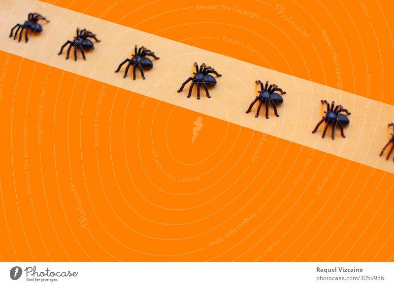 Horrible halloween tarantulas Wallpaper Hallowe'en Animal Spider Herd Orange Black Horror Insect arachnid Spider's web arachnophobia background poisonous