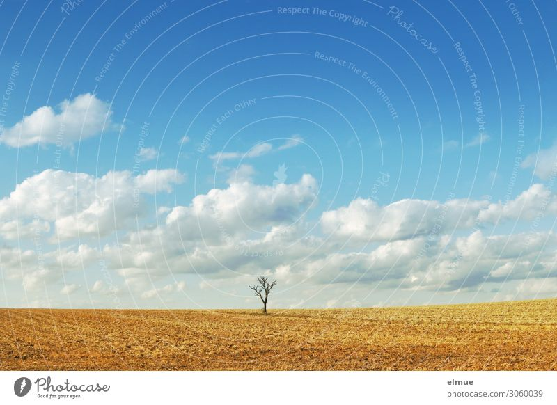 Sky Nature Summer Blue Town Landscape Tree Clouds Loneliness Calm Far-off places Yellow Environment Design Bright Horizon