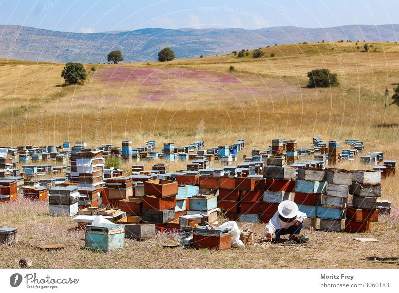Traditional beekeeper at work. Summer Nature Animal Work and employment Vacation & Travel Sell apiculture backyard beekeeping honey-producing bees