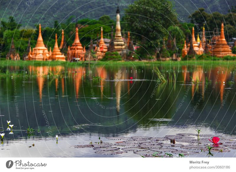 Lotus flower and Pagodas on a Lake. Vacation & Travel Human being Nature Plant Beautiful weather Garden Pink Power Religion and faith pagoda Asia lotus