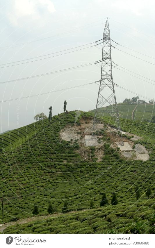 Tower in Tea Garden Mountain Landscape Plant Hill Green tower Electric high tension cables Wire lines tea garden Crops Yield Produce plantation Cultivation
