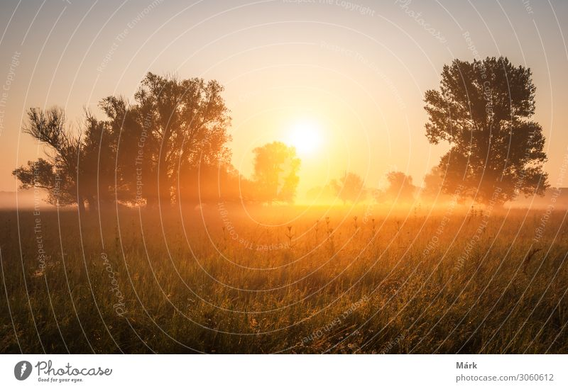 Sunrise over the trees in the grasslands Nature Landscape Plant Earth Sky Horizon Sunset Sunlight Summer Climate Tree Grass Blossom Wild plant Meadow Field