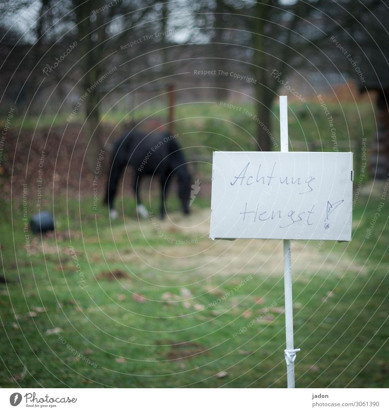 Don't tell me about the horse. Eating Environment Nature Grass Animal Farm animal Horse 1 Signs and labeling Signage Warning sign To feed Voluptuousness Threat