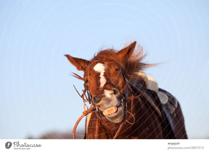 Funny horse shakes Horse Shake Laughter Flying Grimace fun wittily insects Summer itch Ride