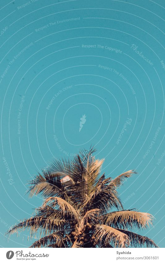 Coconut Tree at Golden Hour Environment Nature Plant Sky Cloudless sky Summer Beautiful weather Adventure Esthetic Freedom Serene summer vibe Coconut tree