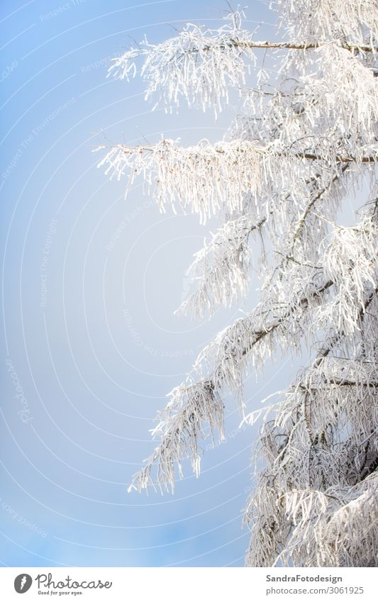 Nature Christmas & Advent Winter Life Climate Frost